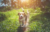 Tipps zum Finden der passenden Hundepension Berlin