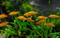 Algen im Aquarium vermeiden