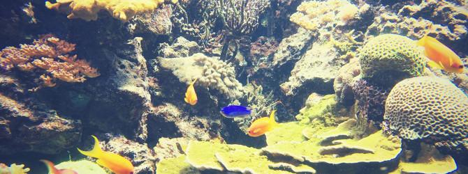 Aquarium für Einsteiger