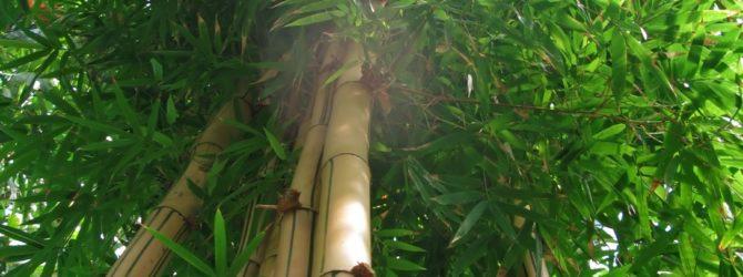 Bambusteppiche – tolle Optik und viele Einsatzmöglichkeiten