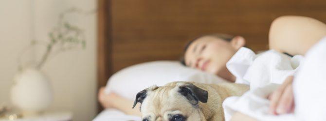 Hypnose mit Flüstertechnik gegen Schlafstörungen