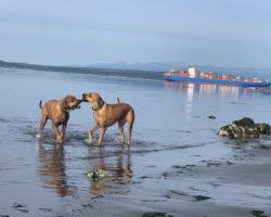 Reisezeit: So schützen sich Hundehalter richtig