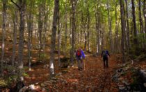 Nordic Walking: Mit zwei Stöcken zu einem gesünderen Leben