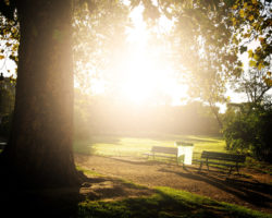 Rindenmulch – der Alleskönner im heimischen Garten