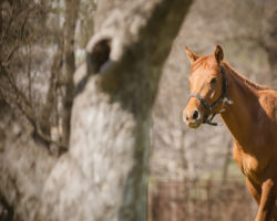 Welche Sportart ist für mein Pferd die Richtige