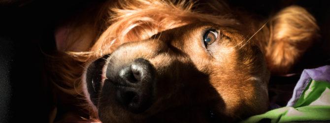 VGH Hundehaftpflicht