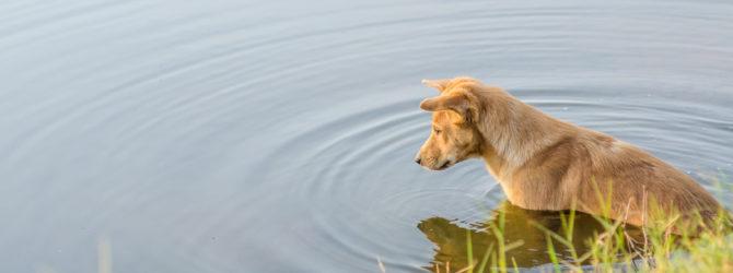 Hundehaftpflicht Vergleich: Worauf vor Abschluss achten?