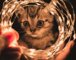Energie sparen und Kosten senken mit LED-Leuchtmitteln
