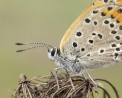 Motten bekämpfen – Informationen zur Beseitigung