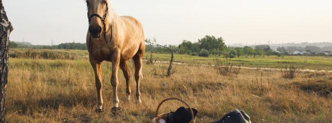 Was macht faliser Pferde so besonders?