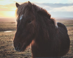 Pferdehaftpflicht ohne aktuelle Testergebnisse