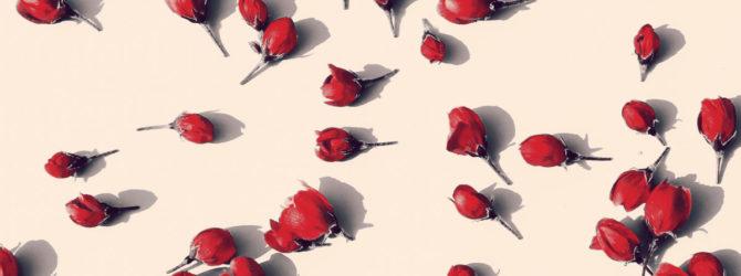 Rosenbogen richtig montieren
